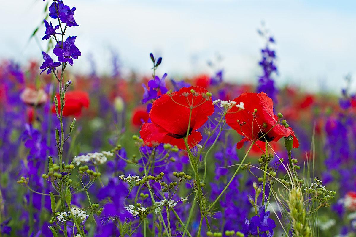 картинки с июльскими цветами начала нужно определиться