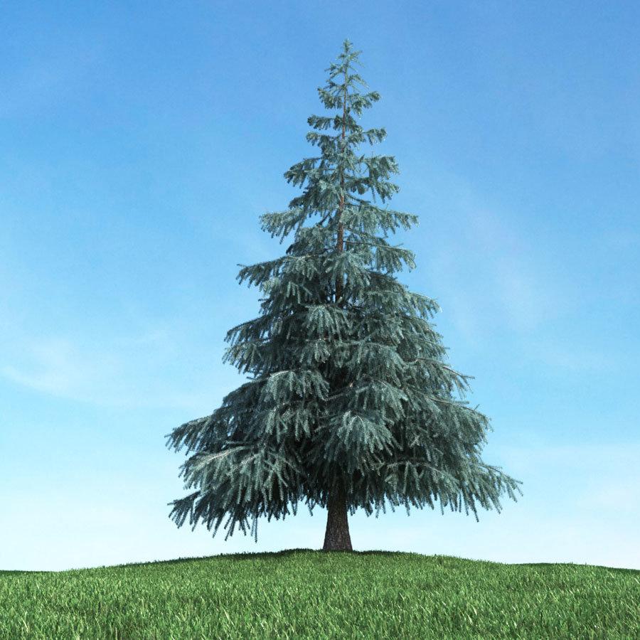 Картинки дерево елка