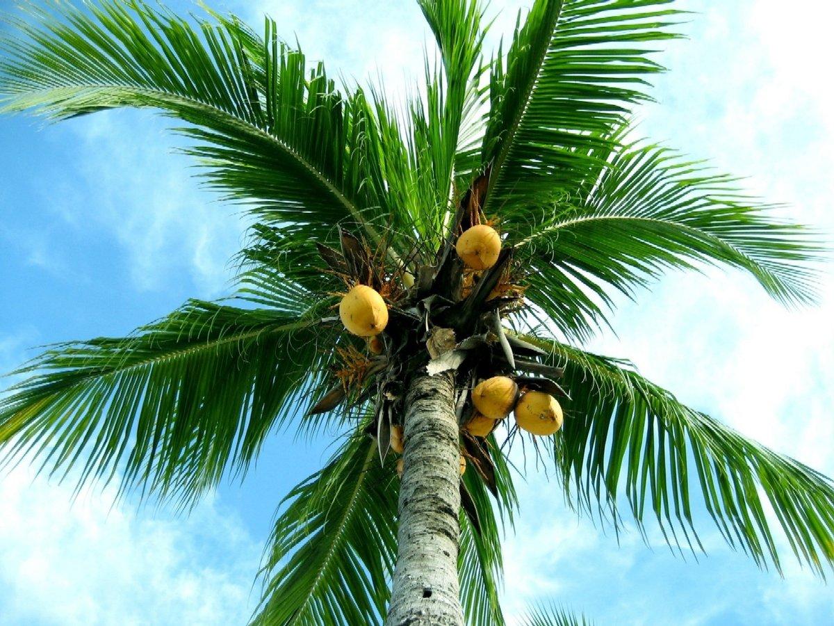 На пальме картинка