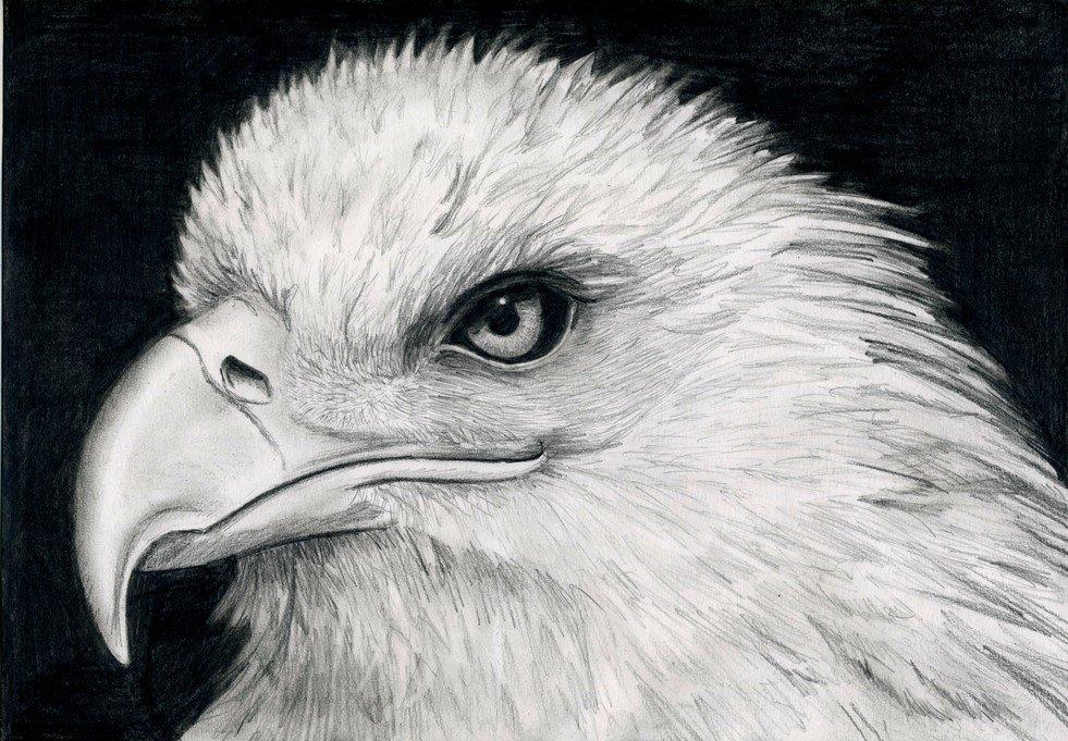 Для, картинки зверей и птиц для срисовывания