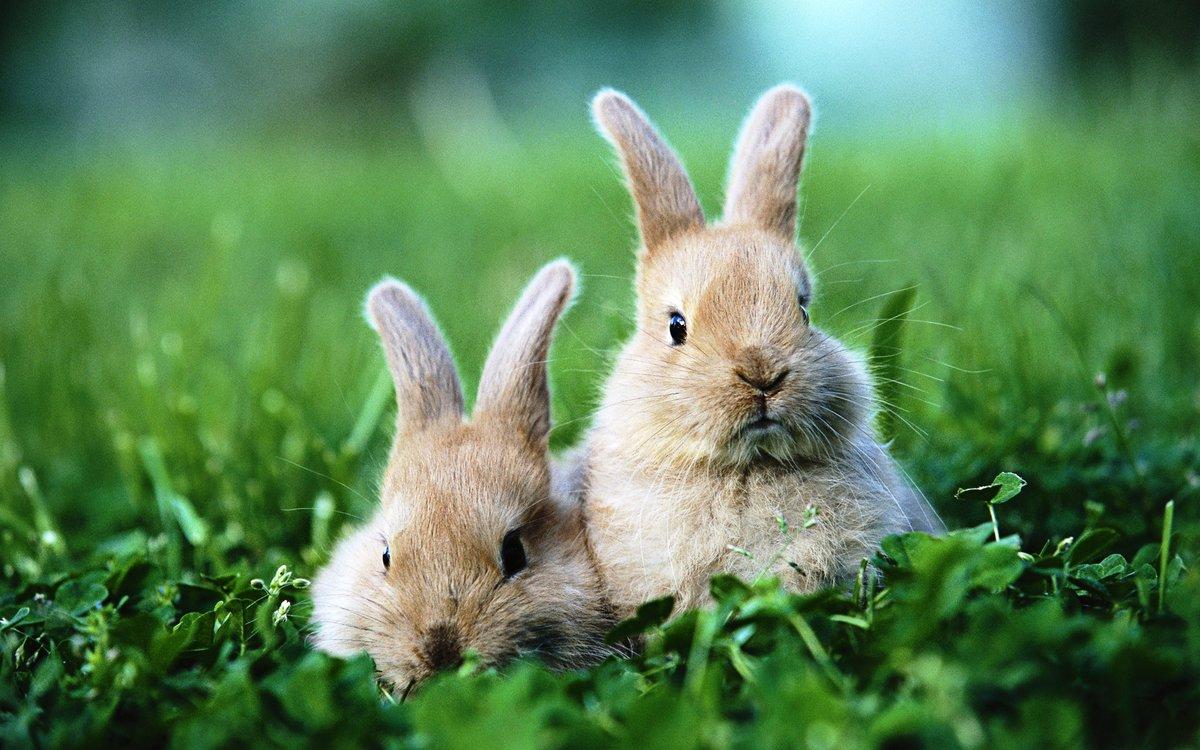 Днем рождения, картинки кроликов и зайчиков