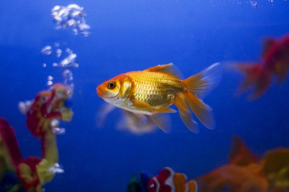 Рыба живые картинки