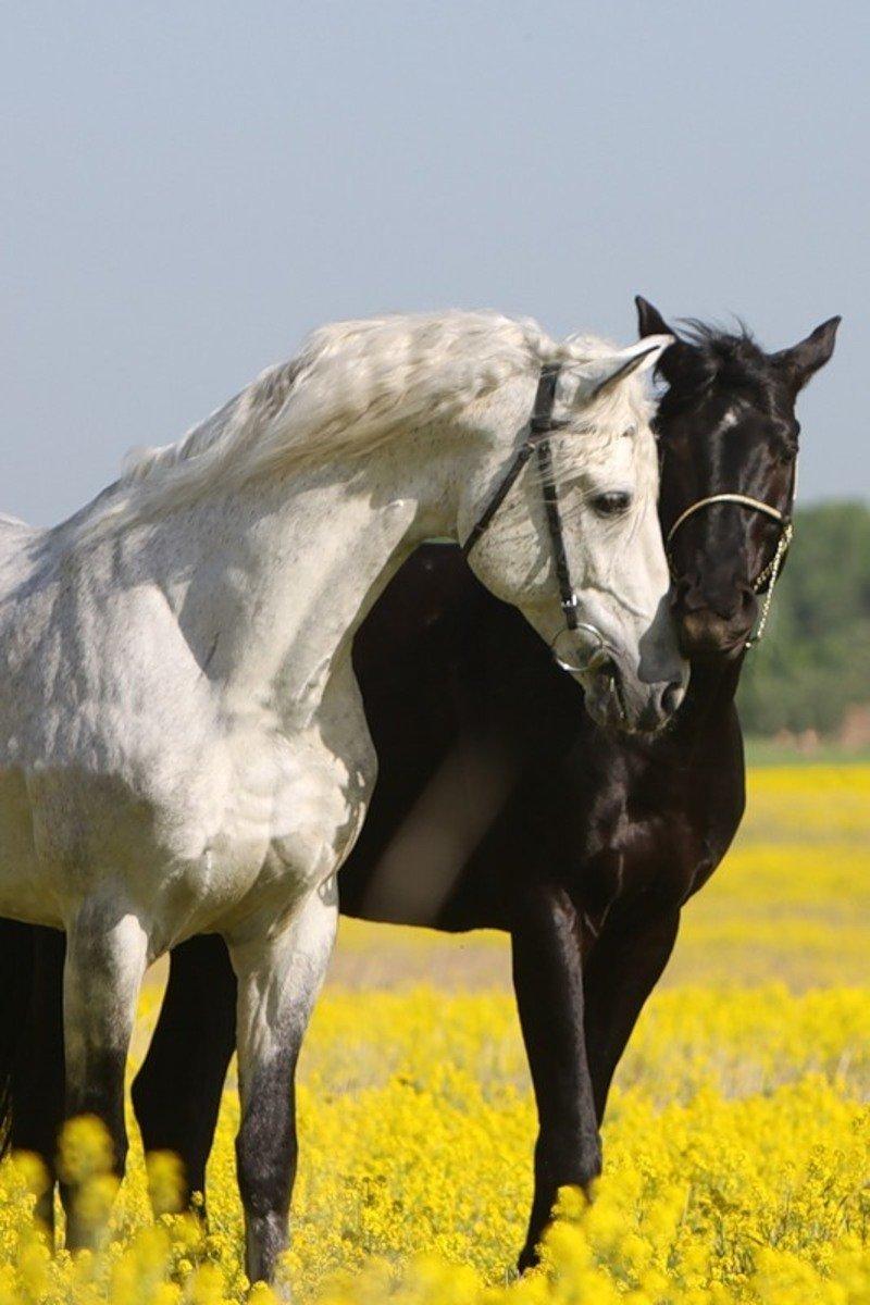 Фото - лошади