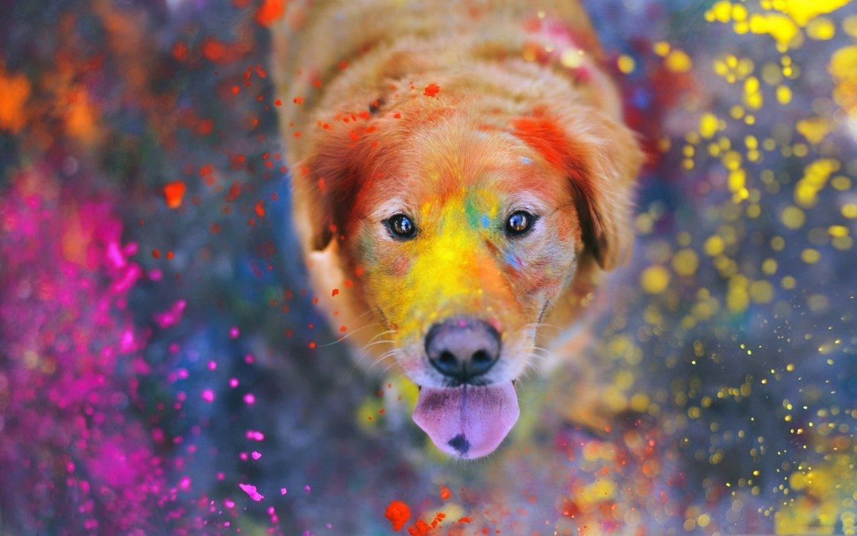 Прикольные и красивые картинки с животными