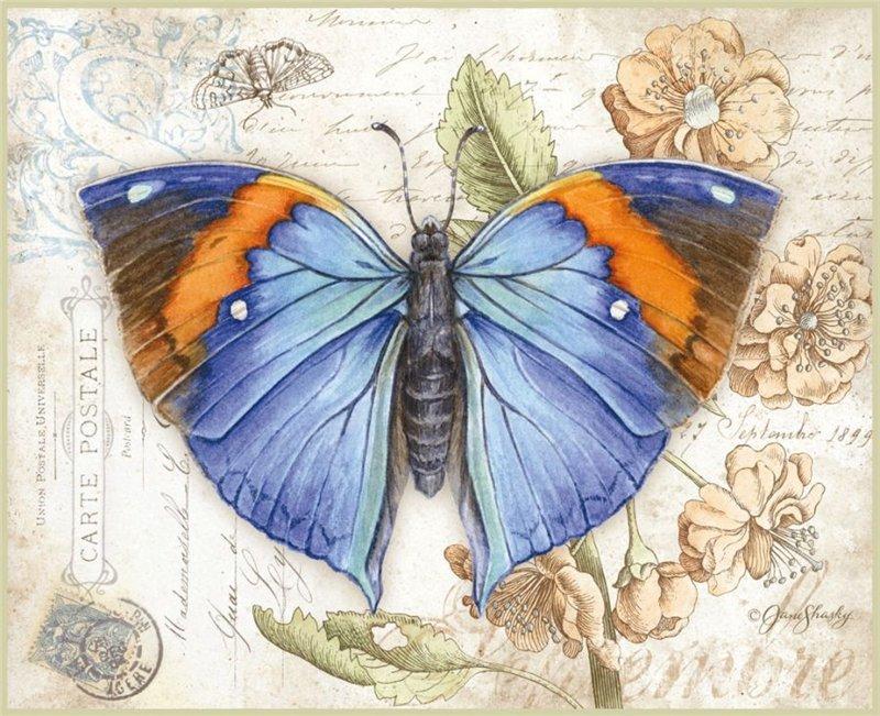 Бабочка картинка для открытки, мужчине