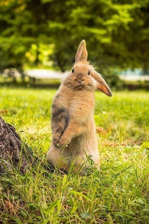 Сделать, картинка кролик прикол