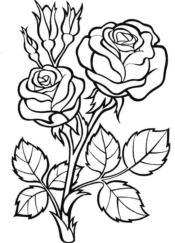 Как нарисовать красивые цветы на открытке, шляпе