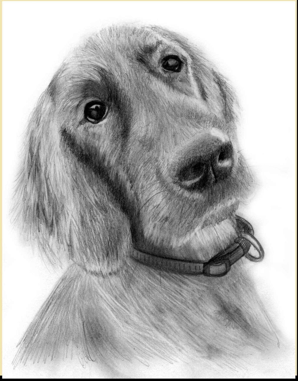 Картинка срисовка собака
