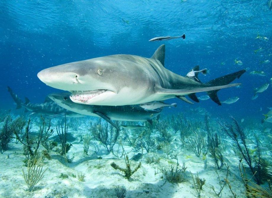 это акулы всех видов картинки волос, где