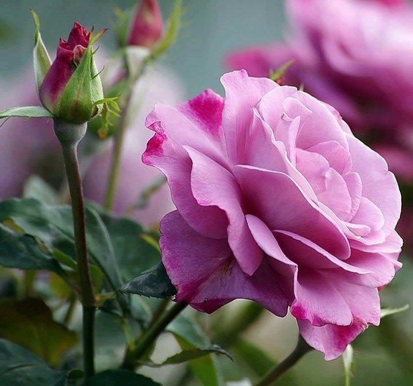 Будь счастлив в этот миг. Этот миг и есть твоя жизнь. ~~~~~~~~~~~~~~~ © Омар Хайям