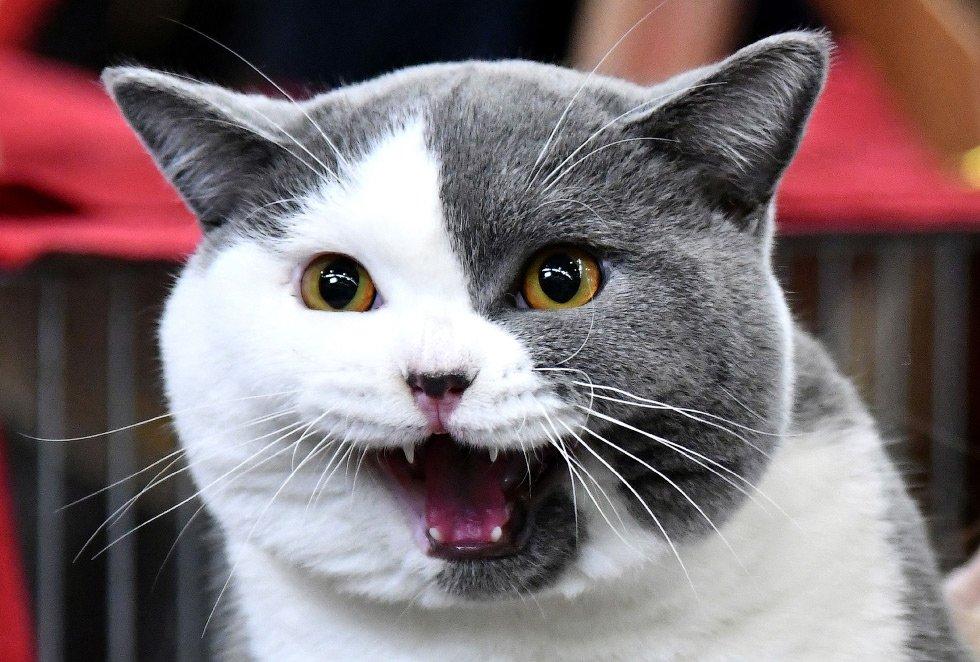 половина человечества кошка улыбается фото один претендентов