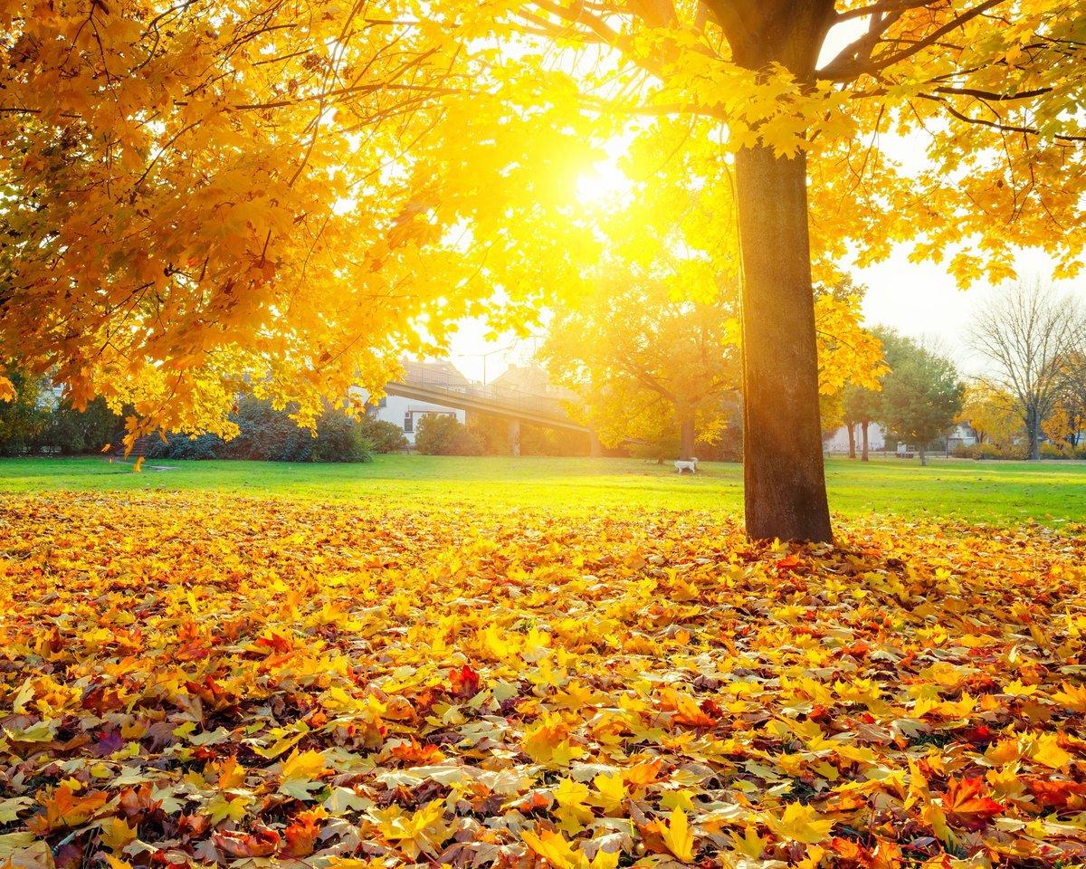 Картинки про осень фото, открытки