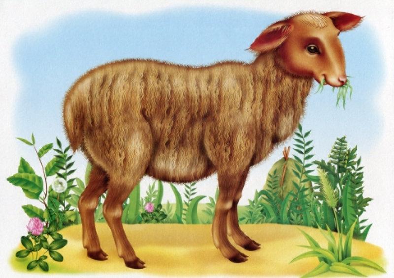 Рисованные картинки для детей домашние животные, открытка швеей картинка