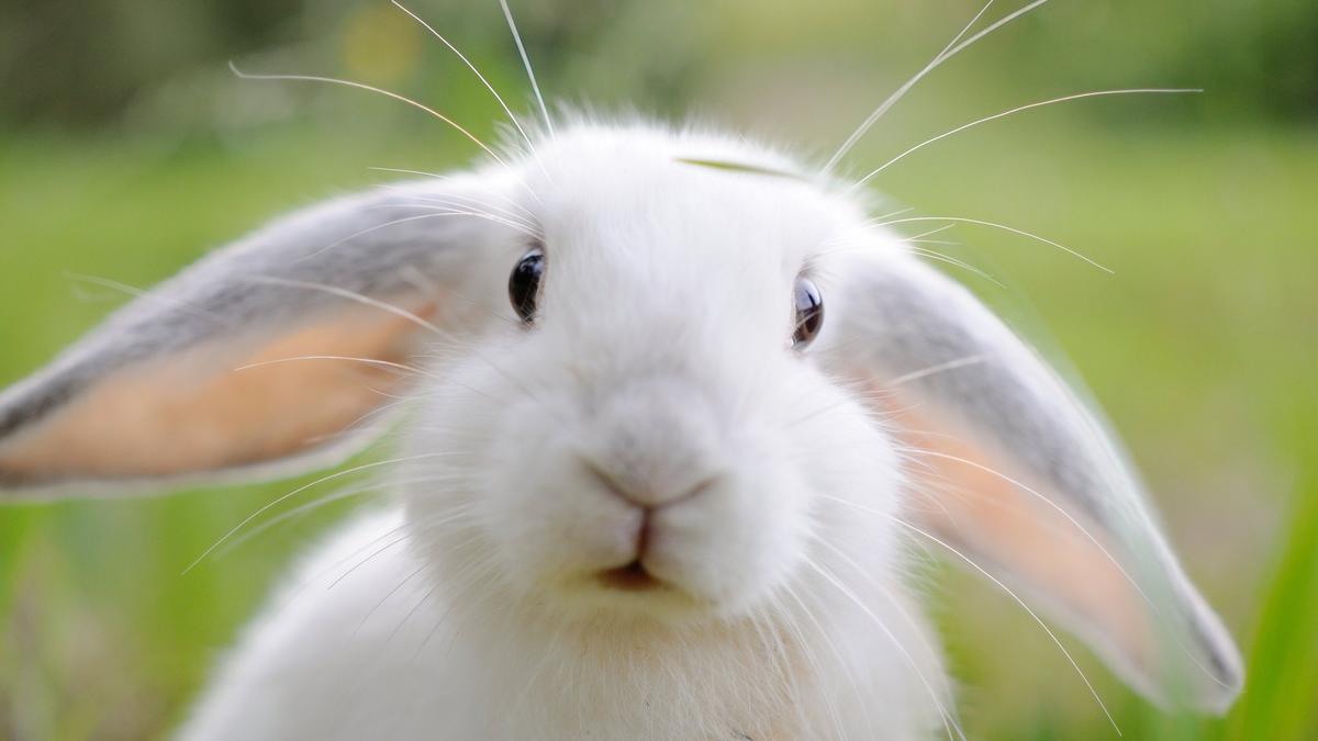 Смешные картинки с зайчиками, открытки рождением мальчика