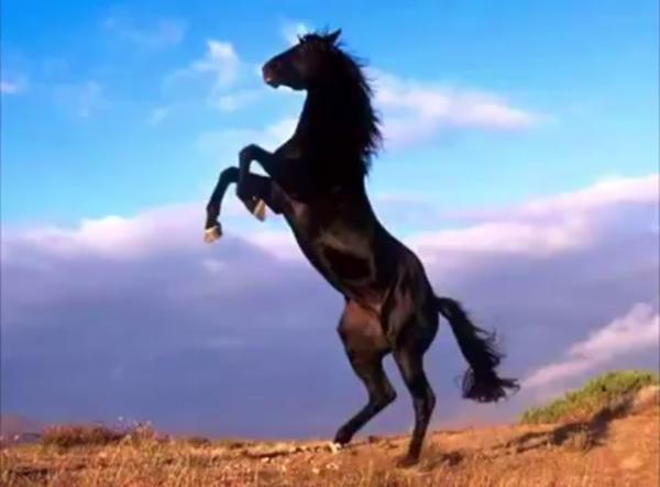Лошади мустанги — дикие и свободные: история, фото, факты | 443x600