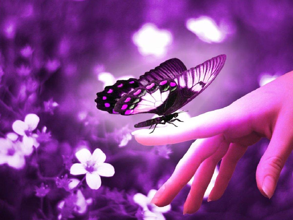 Картинки бабочки с надписями, поздравление