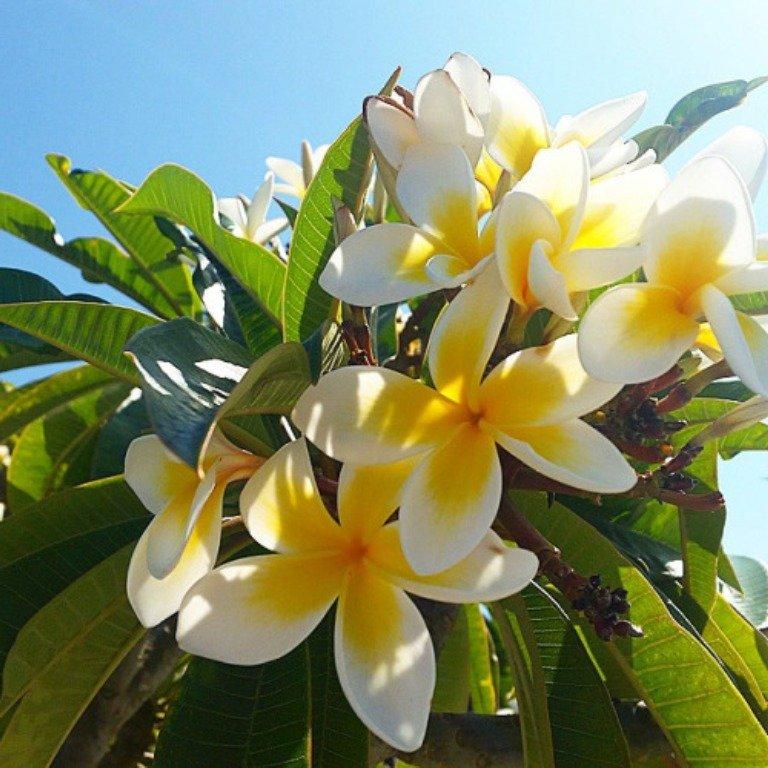 фото цветы тайланда