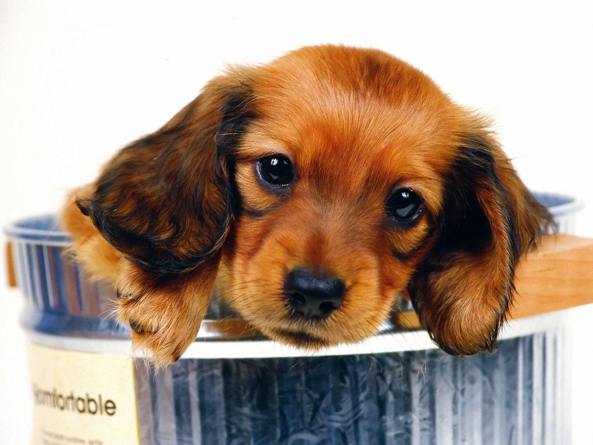 Открытка забавный щенок, открытки поздравления