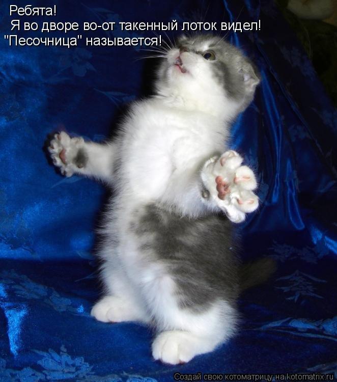 картинки вот так обниму тебя кошки меня они