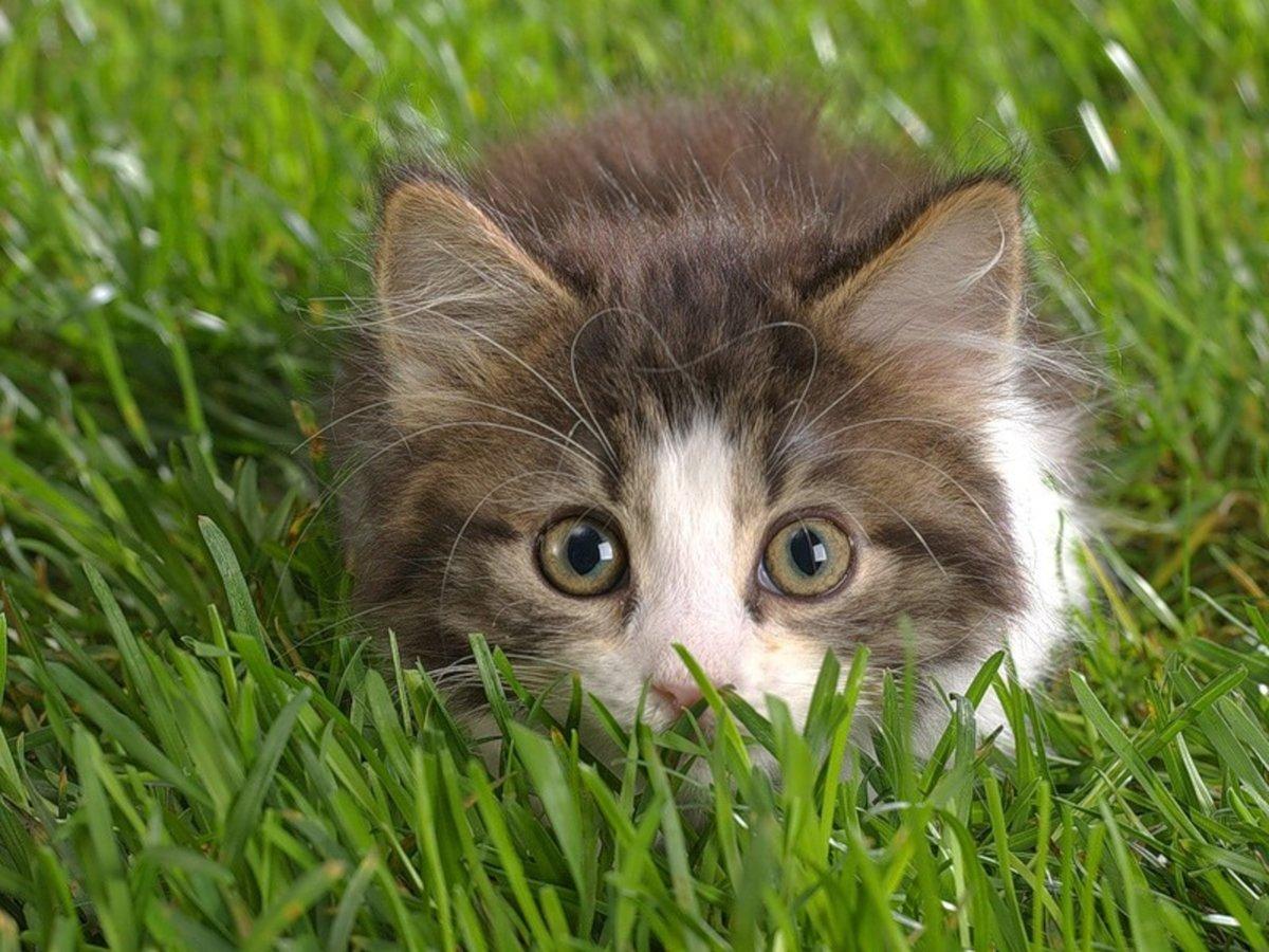 Смешные котята в картинках, картинки