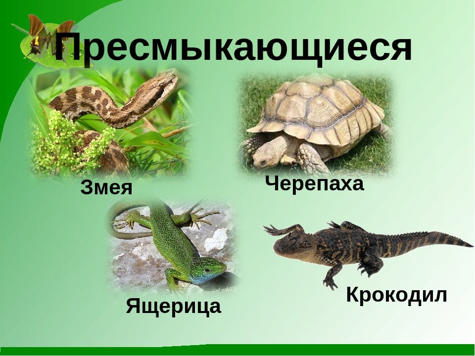 фото рептилии названия с картинками вечера оценили