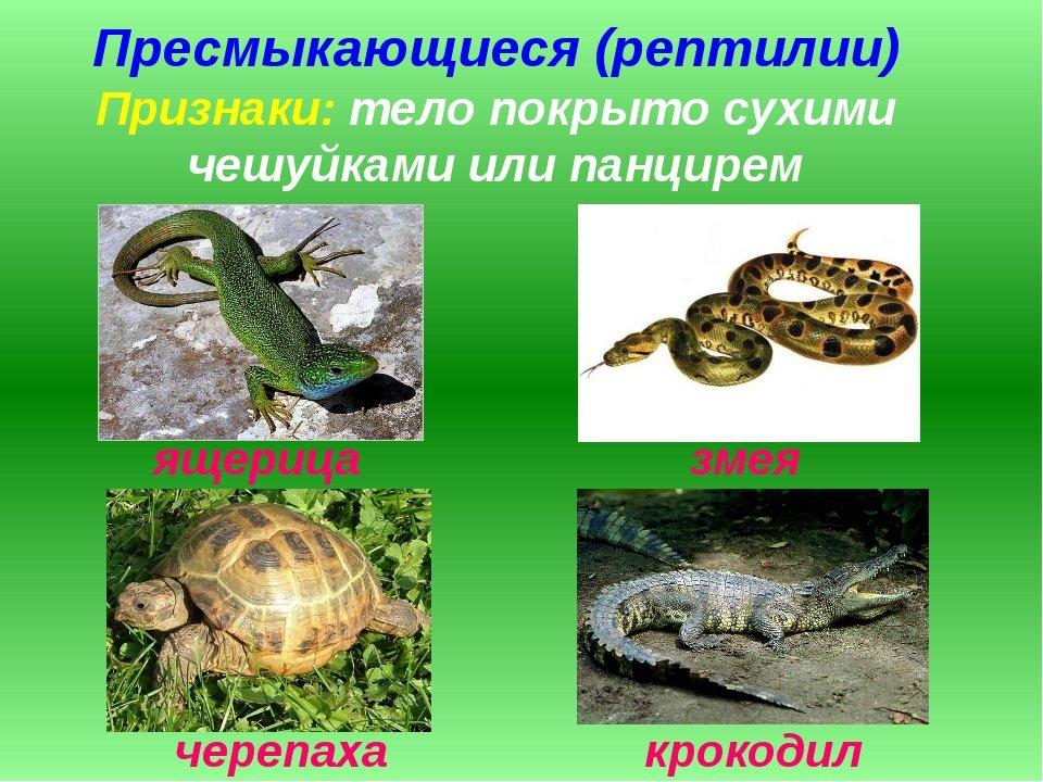 Картинки презентации животных с названиями