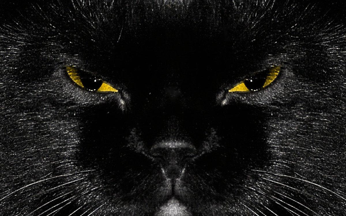 Картинки с черными котами на телефон