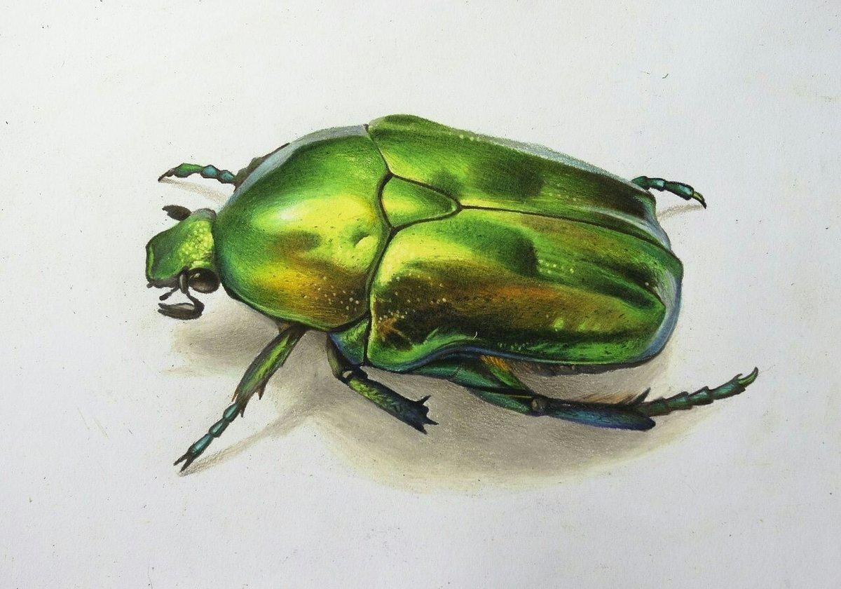работу красивые рисунки жуков мексике