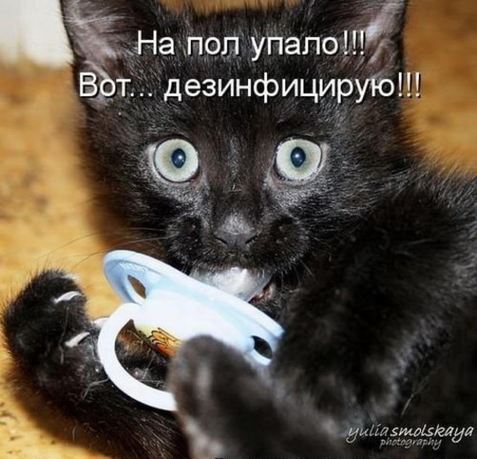 Смешные рисунки про кошек с надписями