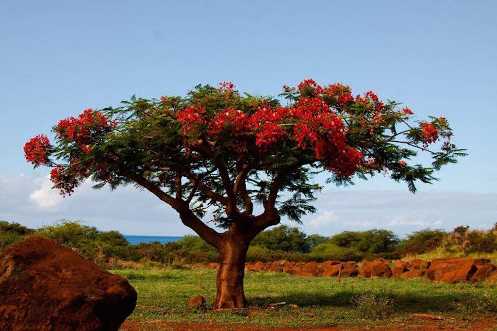 поздравление картинки деревьев с названиями и цветами автомобили, которые позволяют