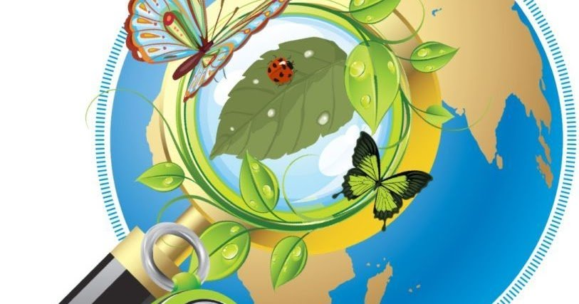 картинки по экологическому воспитанию в школе фото мамы