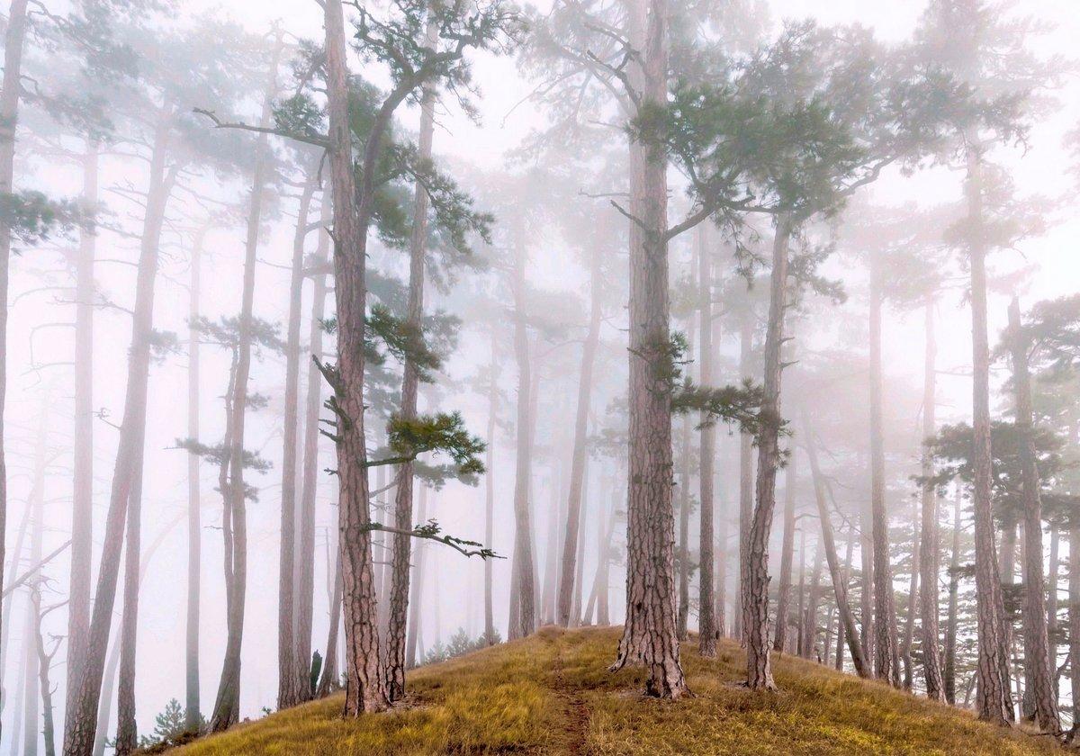 Туманная осень #осень #лес #Ñолм #туман #природа #тропа