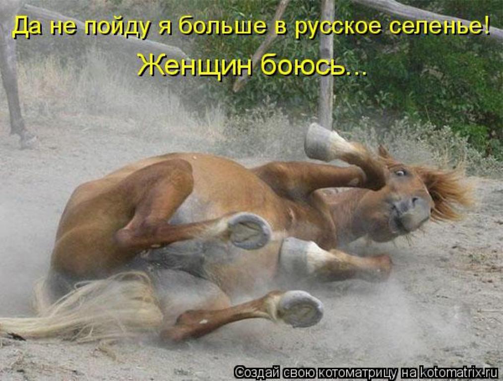 Картинки от работы кони дохнут прикол, поздравительные директору
