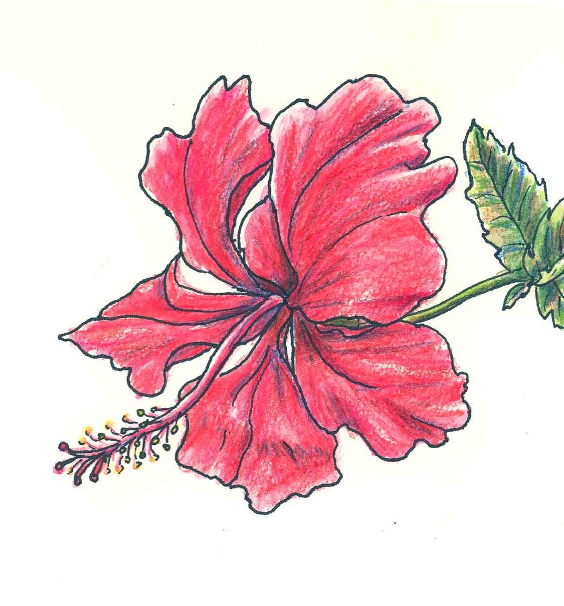 так фото цветы срисовать бродерик известный американский