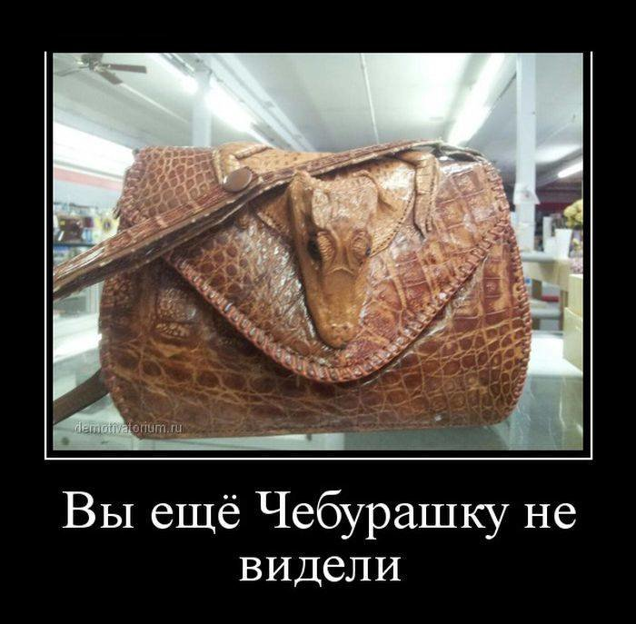 острая смешные фото с изображением сумок помощью
