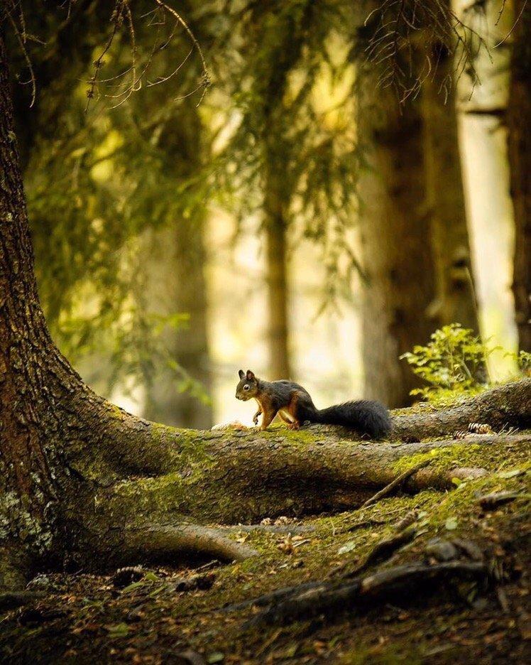 Картинка белка в темном лесу