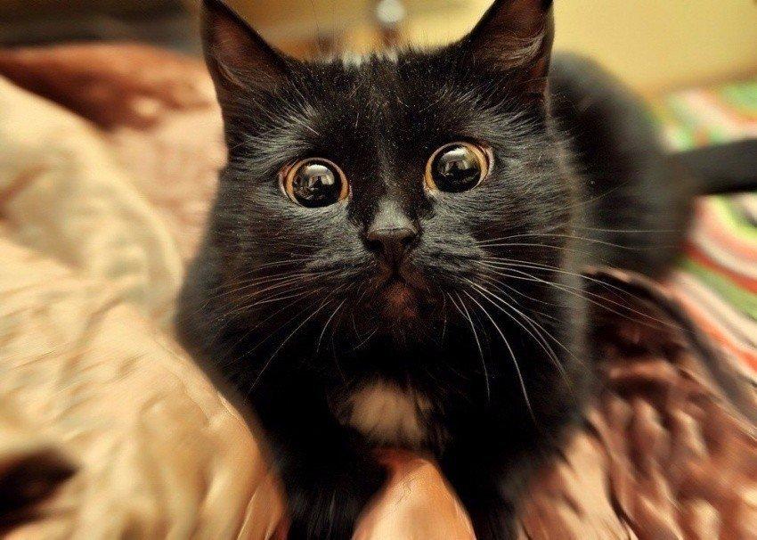 Картинки смешных котов черных, картинки