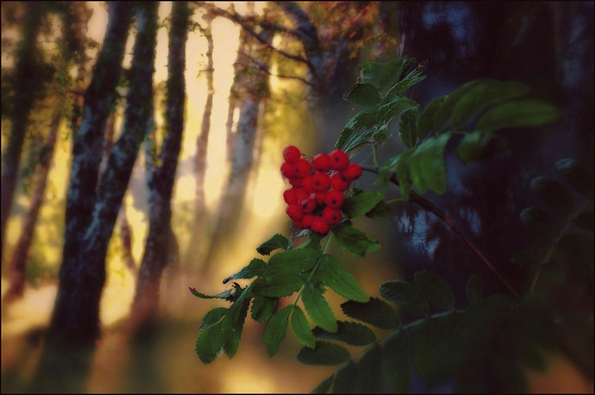 картинки грустная осень рябина