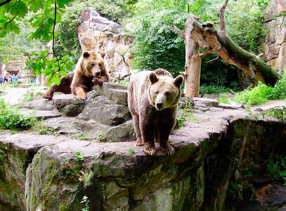 Картинка зоологического сада