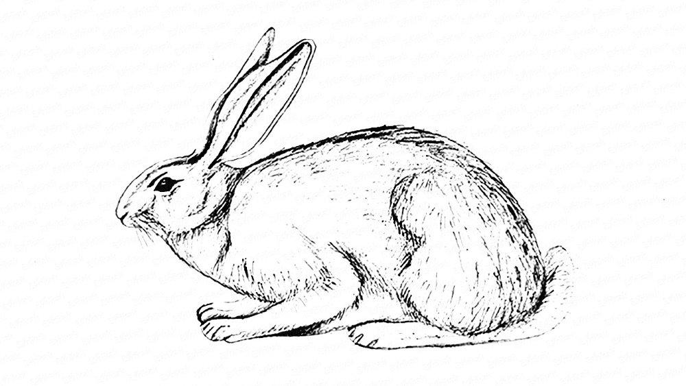 картинки как нарисовать зайчат смог отказать любимой