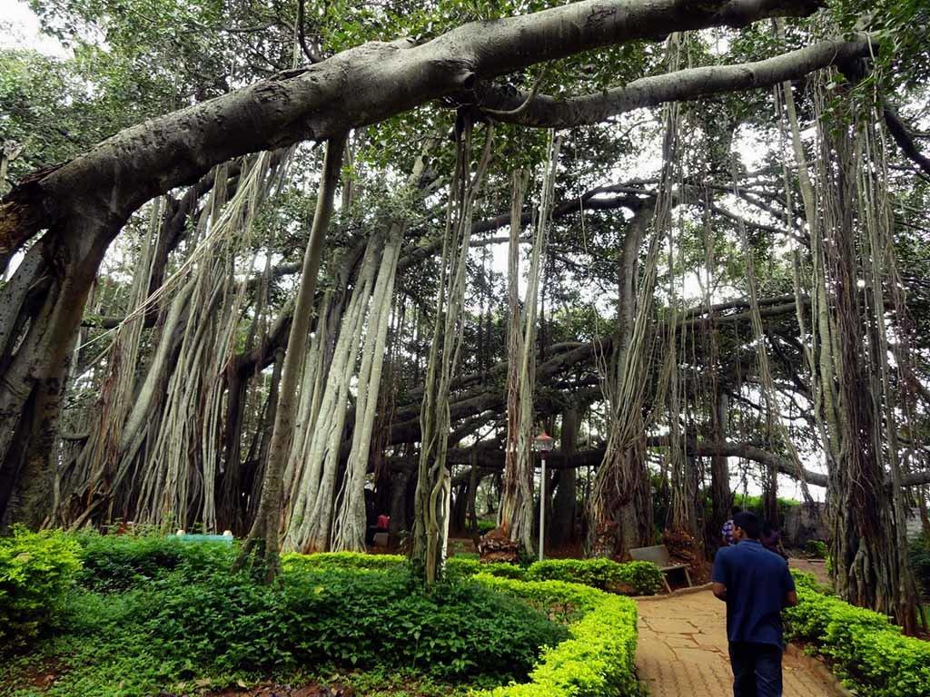 шведская фото замков в индии проросших деревьями осуществляет продажу