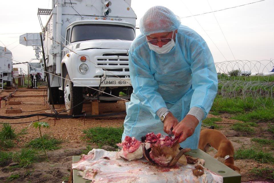 Картинки ветеринарно санитарная экспертиза