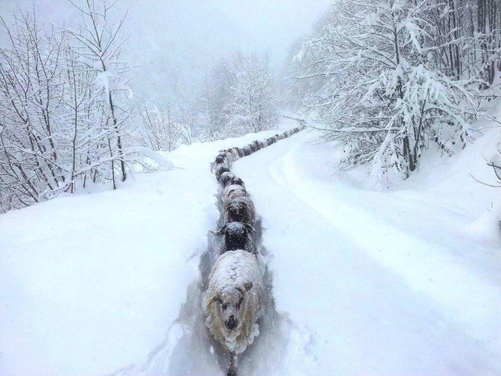 Картинка прикол снег, выходом