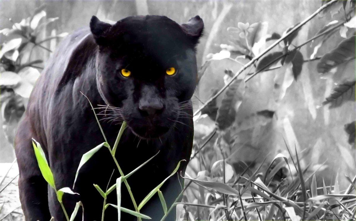 На андроид картинки на заставку животные