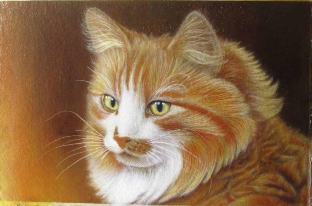 Рождество 2015, рыжий кот картинки нарисованные