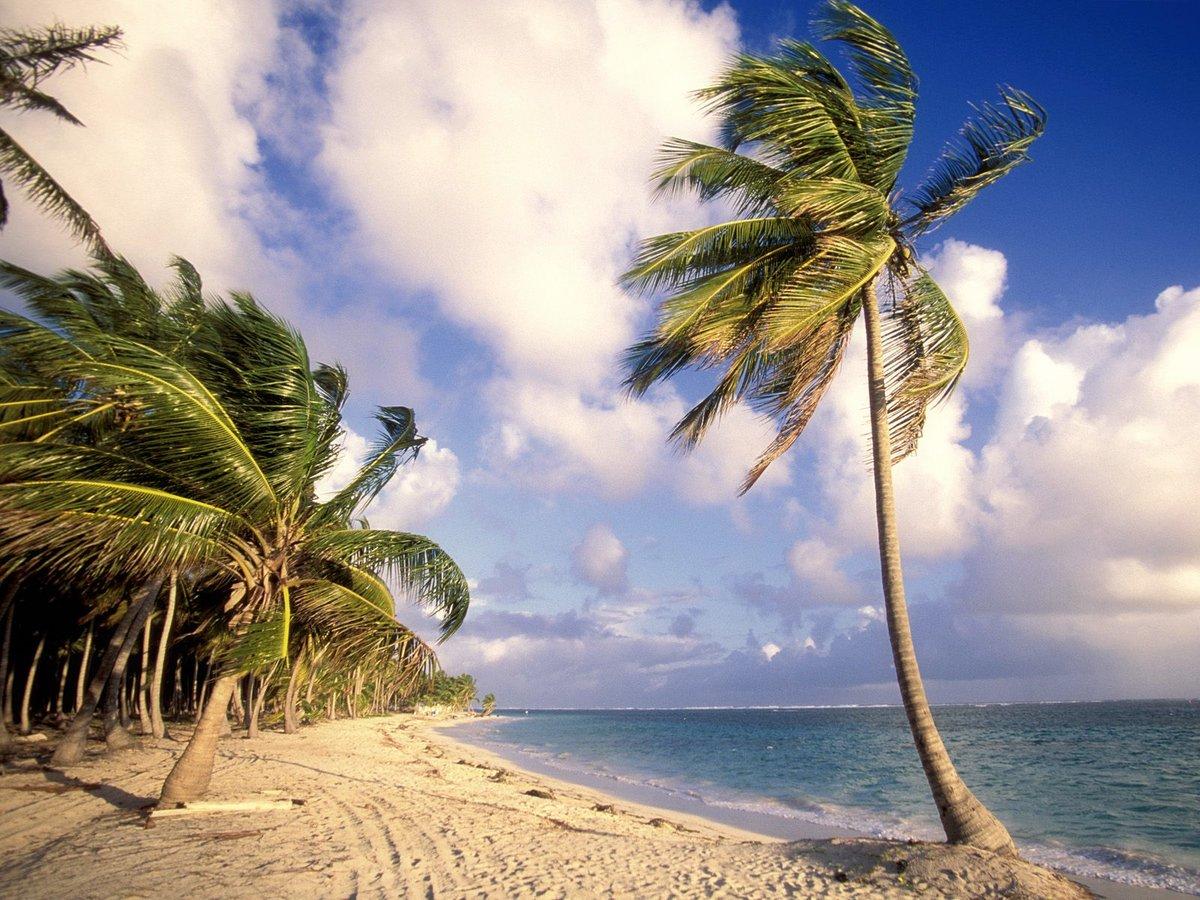 Смешные картинки с пальмами