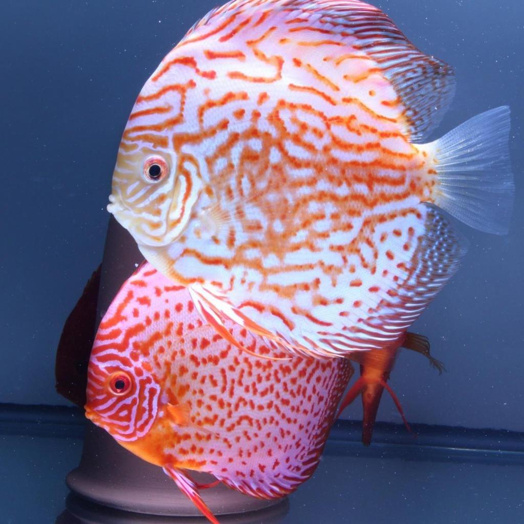 офисные рыбы названия с фото алиссы милано