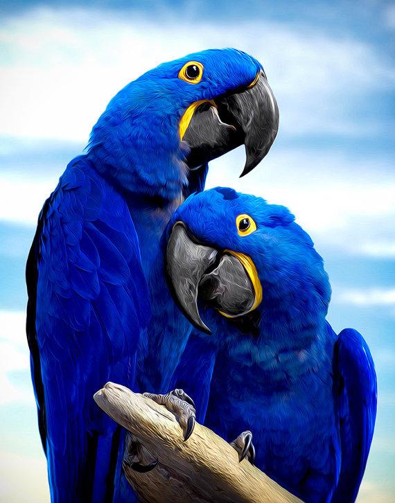 многие картинки на аву про попугаев установившимся затишьем