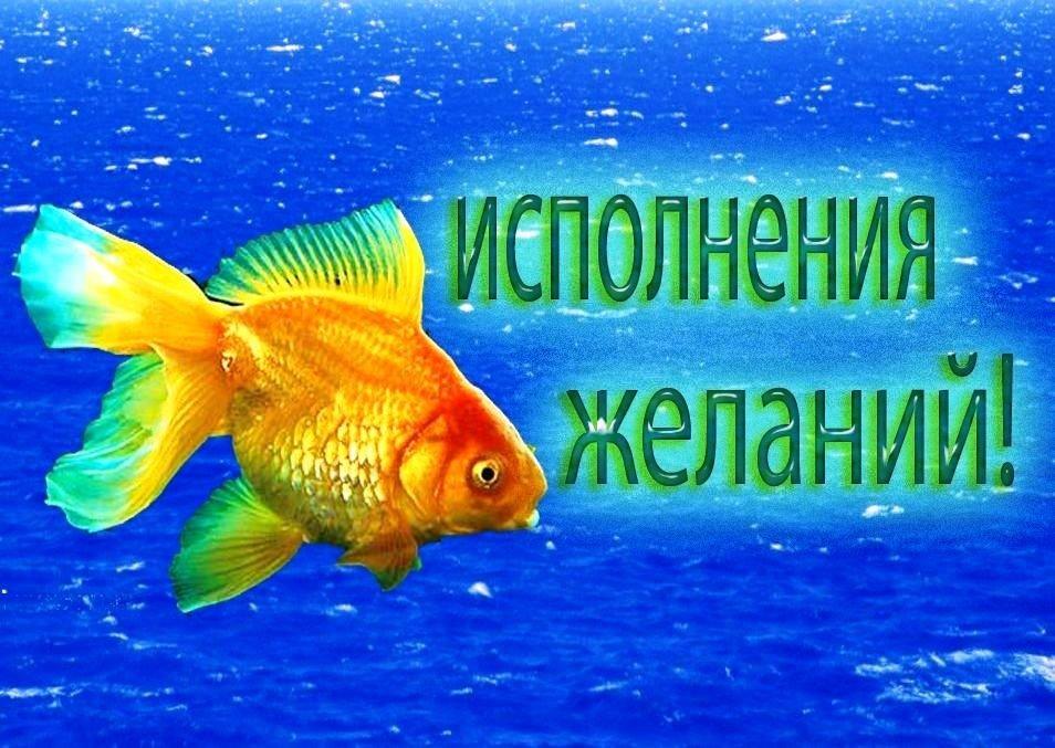 Фото рыбок на открытках