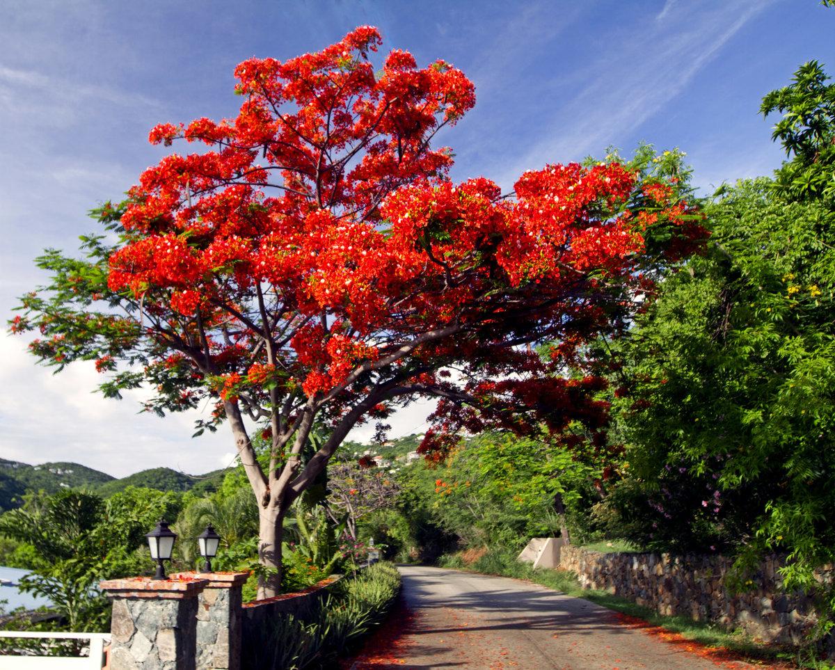 Самое красивое цветущее дерево фото